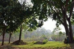 Recurso natural en la selva tropical tropical, Asia Foto de archivo