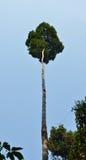 Recurso natural en selva tropical tropical Fotos de archivo libres de regalías