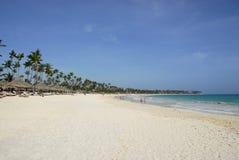 Recurso tropical - Careibas Imagens de Stock
