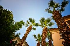 Recurso tropical com um céu azul e as palmeiras Foto de Stock