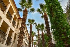 Recurso tropical com um céu azul e as palmeiras Foto de Stock Royalty Free
