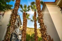 Recurso tropical com um céu azul e as palmeiras Fotografia de Stock Royalty Free