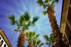 Recurso tropical com um céu azul e as palmeiras Imagem de Stock Royalty Free