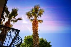 Recurso tropical com um céu azul e as palmeiras Imagens de Stock