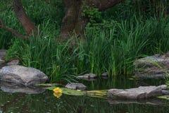 Recursos hídricos que é poluído com vários lixo e lixo, rios poluídos foto de stock royalty free