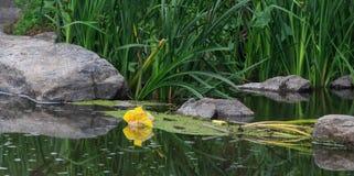 Recursos hídricos que é poluído com vários lixo e lixo, rios poluídos foto de stock