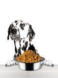 Recusa bonito do cão a comer de uma bacia Fotos de Stock