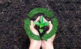 Recyclable symbol a green tree in hand. Recyclable symbol a green tree in a hand Stock Photos