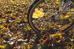 Recyclage en plan rapproché de parc d'automne photo stock