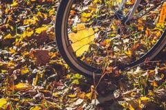 Recyclage en plan rapproché de parc d'automne image stock
