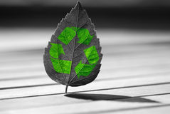 Recycle icon on  leaf Royalty Free Stock Image