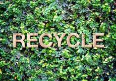 Recycle machte vom hölzernen Wort auf Blattwand, Eco-Konzept stockfotografie