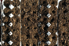 Recycle Seedling Starter Royalty Free Stock Images