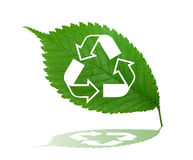 Recycle sign on green leaf Stock Photo