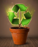 Recycle sign growing out of flowerpot Royalty Free Stock Images