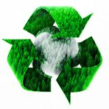 Recycle Symbol with Forest of Pine Trees Royalty Free Stock Image