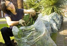Recycle waste. Female cutting up tree for reycyling and putting in bags Stock Images