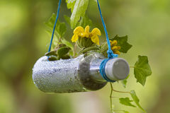 Recycled gardening. Gardening crafts with recycled items royalty free stock photo