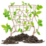 Recycleer bak Royalty-vrije Stock Afbeelding