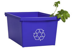 Recycling bin with plant. Blue recycling plastic bin with plant inside. ProPhoto color space. clipping path included Royalty Free Stock Photo