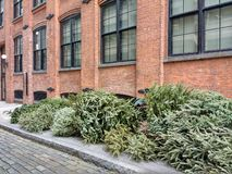 Recycling Christmas Trees, Pine Trees At The Curb After The Holidays, Brooklyn, NY, USA royalty free stock photo