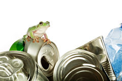 Recycling frog Royalty Free Stock Image