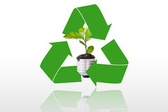 The recycling symbol of arrows surrounding green t. Ree, Go green concept Royalty Free Stock Photo