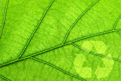 Recycling symbol on leaf Royalty Free Stock Photo