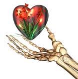 Red 3D heart in bones hand Stock Photo