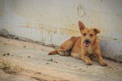 Red abandoned homeless stray dog is lying in the street. Little Stock Images
