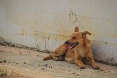 Red abandoned homeless stray dog is lying in the street. Little Royalty Free Stock Photo