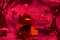 Red abstract background with water drops Stock Image