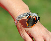 Red admiral butterfly on arm Royalty Free Stock Photography
