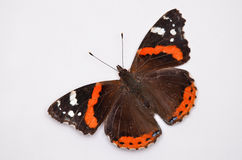 Red Admiral isolated on white, Vanessa atalanta Stock Photos