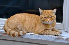 Red adult cat lies on a windowsill Stock Photos