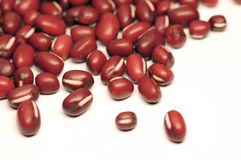 Red adzuki beans Stock Images