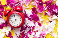 Red alarm clock in peony flowers. royalty free stock image