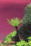Red algae lake Royalty Free Stock Image