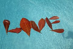 'LOVE' Leaves on Turquoise. Red Almond 'LOVE' leaves on turquoise water – Leaves fashioned to spell word 'LOVE Royalty Free Stock Photography