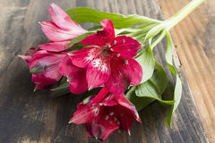 Red Alstroemeria Flower. On a Rustic Wooden Background Stock Photos