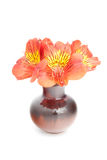 Red Alstroemeria Lily bouquet isolated on white Stock Image