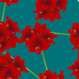 Red Amaryllis on Teal Indigo Background. Christmas Day. Vector Illustration Stock Photography