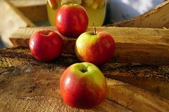 Red Amasya Apples Endemic-Turkey and fire woods stock photography
