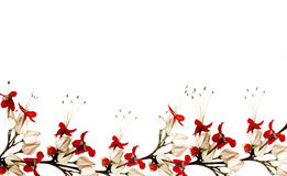 Red And Black Butterfly Flower Border Stock Photography