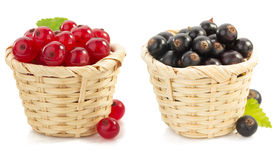 Free Red And Black Currants Berry Stock Photo - 48464030