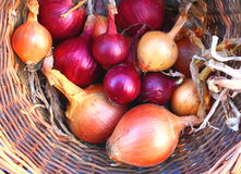 Red And Golden Brown Onions Stock Photography