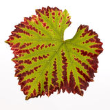 Red And Green Colored Leaf Stock Photos