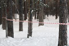 Free Red And White Security Tape On Trees In The Winter Forest. Deforestation. Fenced Off Crime Scene Stock Photography - 210317482