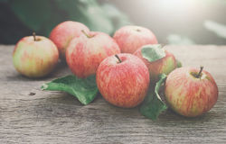 Free Red And Yellow Apples Harvest In Fall Garden Royalty Free Stock Image - 92951766