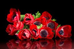 Red anemone bouquet Stock Images